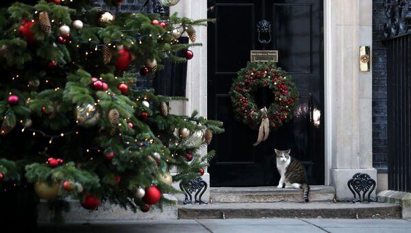 Кот Ларри сидит возле рождественской елки на Даунинг-стрит в Лондоне. Архивное фото