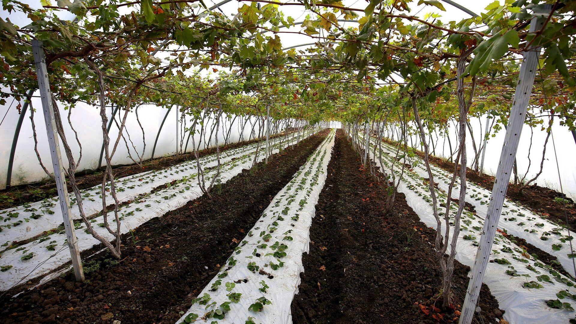 Кубань к 1 апреля завершит инвентаризацию виноградопригодных земель
