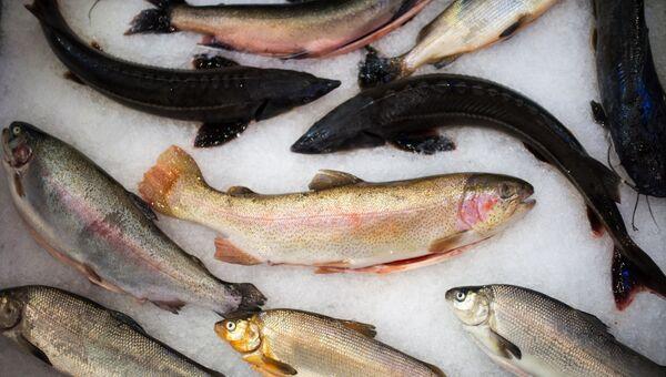 Рыба на Российской агропромышленной выставке Золотая осень-2017 на территории ВДНХ в Москве