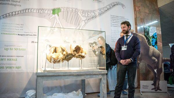 Окаменелости динозавра Sibirotitan astrosacralis