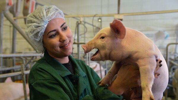 Сотрудница группы компаний Здоровая Ферма на площадке доращивания поросят