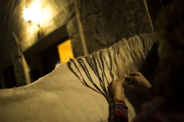 Женщина заплетает кося лошади перед ритуалом в честь святого Антония Аббата в Сан-Бартоломе-де-Пинарес, Испания