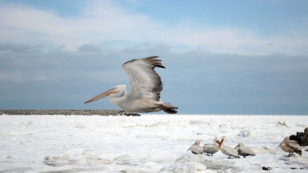 В Дагестане создали все условия для зимовки диких животных