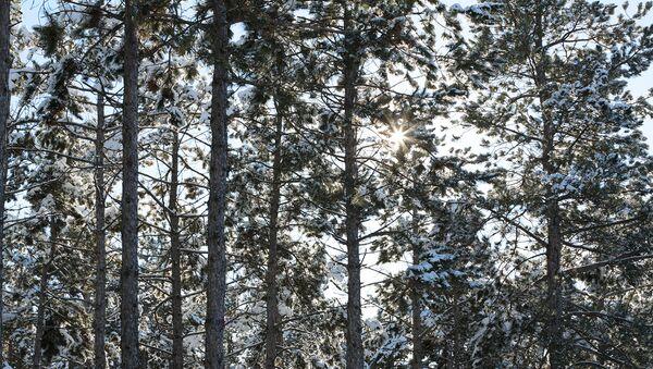ОНФ в Подмосковье наметил план действий по проблемам экологии на 2018 год