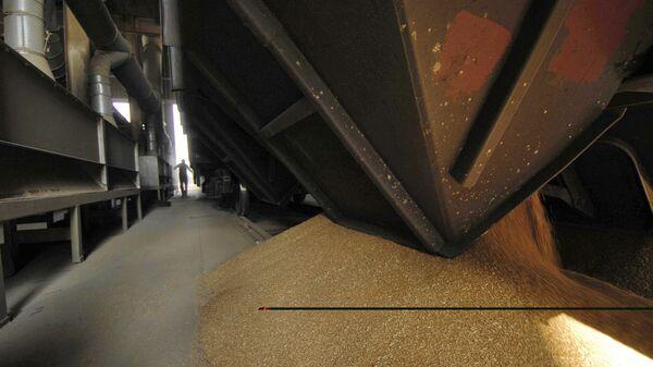 Разгрузка вагона с зерном на зерновом терминале в морском торговом порту