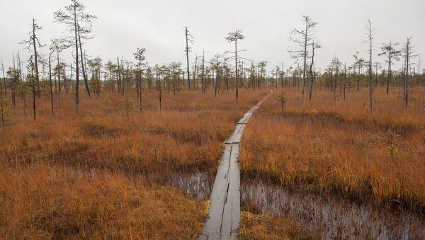 Деревянная тропа через болото в национальном парке Водлозерский