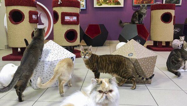 Кошкам комфортнее общаться с людьми в знакомой для них обстановке,например, в котокафе
