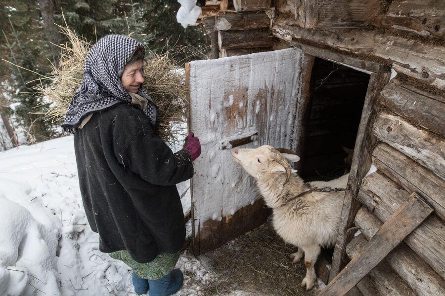 Агафья Карповна содержит коз более 30 лет