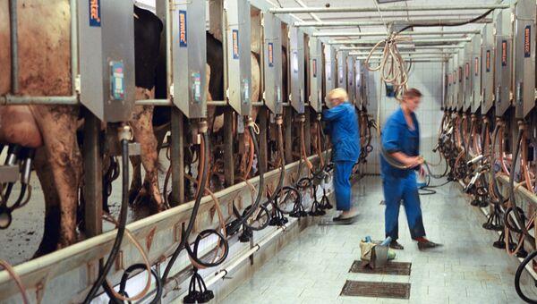 Комплекс по производству молока в Витебской области. Белоруссия