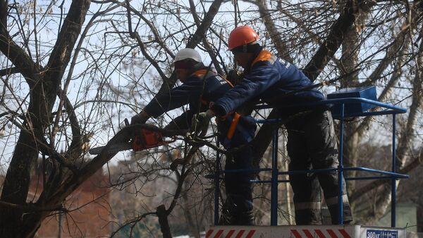 Сотрудники коммунальных служб обрезают ветви деревьев в Юго-Восточном административном округе города Москвы