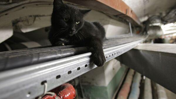 Кот в подвале