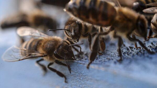 Калининградец отсудил у соседа-пасечника 15 тысяч рублей за укусы пчел