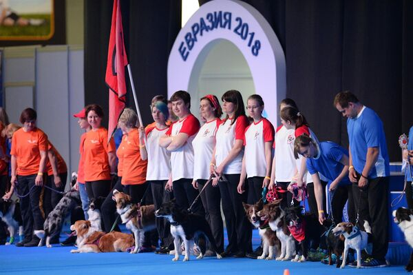 Участники выставки собак Евразия-2018в МВЦ Крокус Экспо в Москве. 5 мая 2018