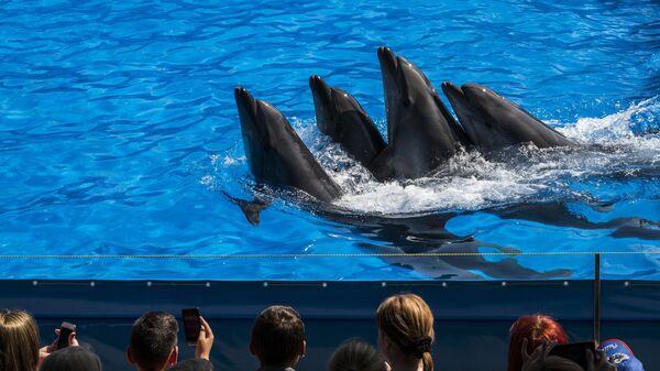 Выступление дельфинов на открытии дельфинария Немо Молдова в Кишиневе
