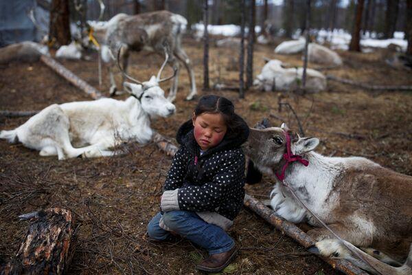 Шестилетняя девочка сидит в окружении оленей своей семьи неподалеку от поселка Цагааннуур, Монголия