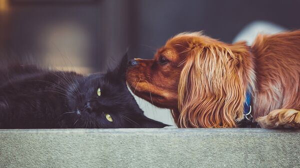 Ученые нашли антитела к коронавирусу у собак и кошек