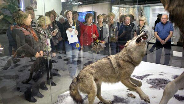 Волонтер Екатерина Фридман проводит экскурсию в Дарвиновском музее