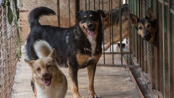 Собаки в приюте для бездомных животных