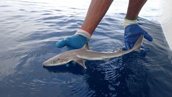 Акула, обнаруженная во Флориде