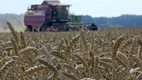 Уборка урожая зерновых