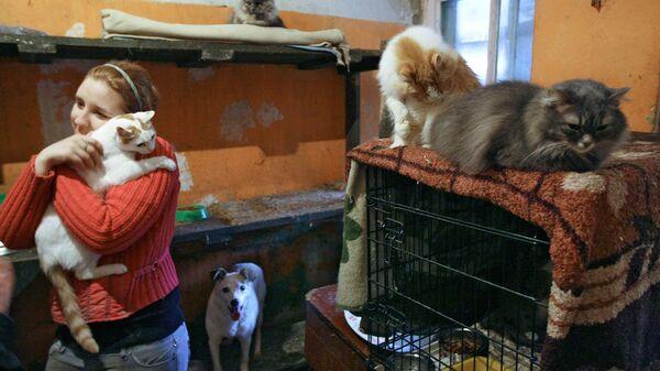 В приютах для животных места немного, кроме того, питомцам там не хватает человеческой ласки и заботы. Реабилитацией животных в приютах занимаются разные фонды