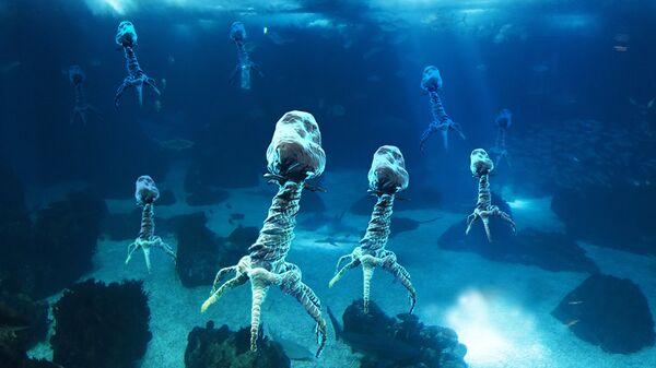 Морские вирусы  - самые многочисленные организмы, обитающие в Мировом океане