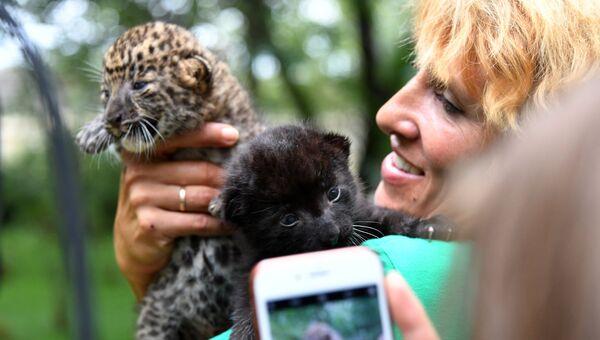 Старший кипер крымского сафари-парка Тайган Леокадия Перевалова с новорожденными котятами пантеры и леопарда в сафари-парке
