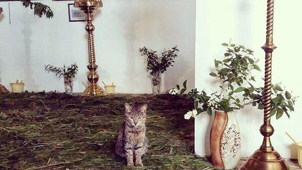 Кот в храме Казанской иконы Богородицы в Орске. Архивное фото