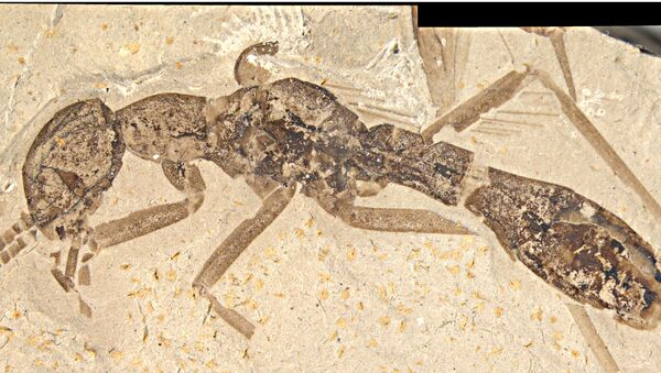 Тараканомуравей, открытый сотрудником Палеонтологического института РАН