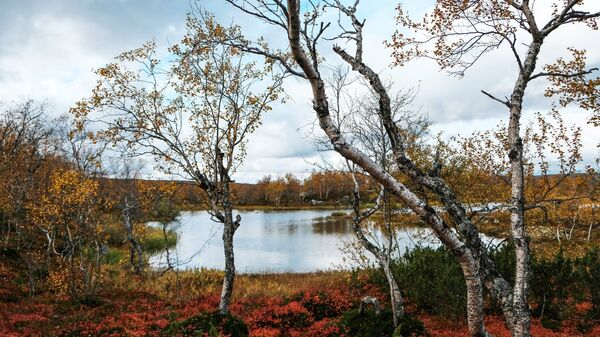 Кольский полуостров Мурманской области Кольского района