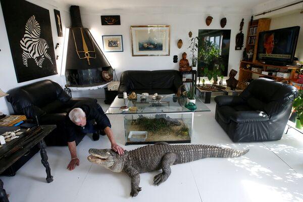 Француз Филипп Жилле кормит своего аллигатора Али курицей в гостиной своего дома в Куэроне