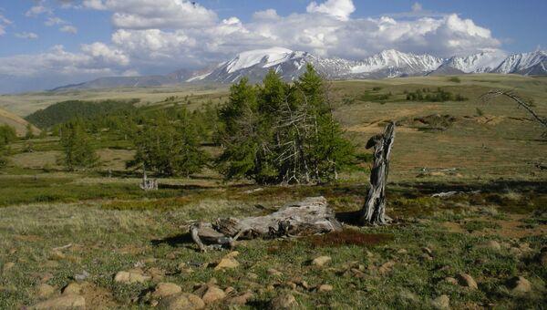 Экспедиция в Туву в поисках старых деревьев