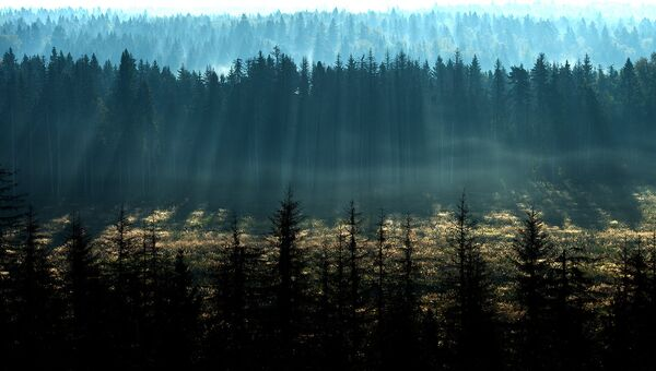 Кто инвестирует в лес возможно ли получить кредит если зарплата серая
