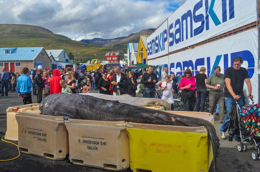 Рыбный фестиваль в Исландии
