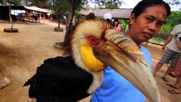 Туристам показывают экзотических птиц на пляже Нуса Дуа
