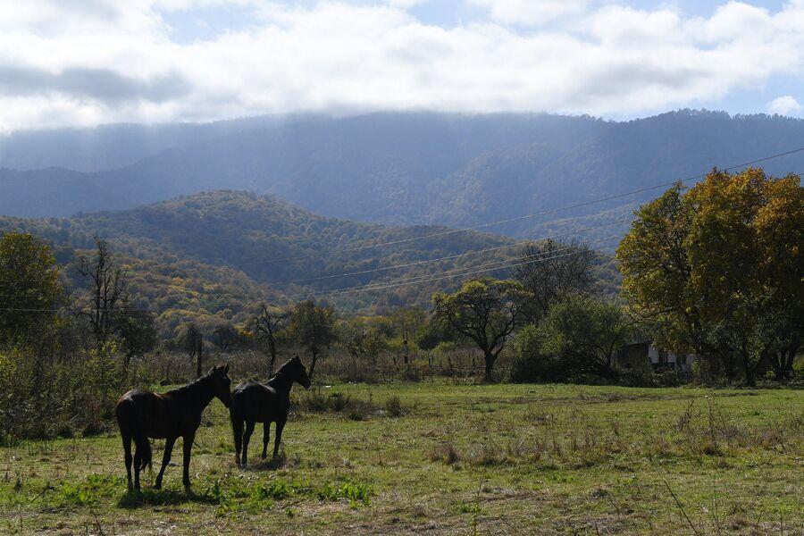 Лошади возле селения Даттых Сунженского района Ингушетии