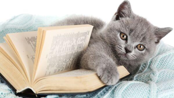 Котенок с книжкой