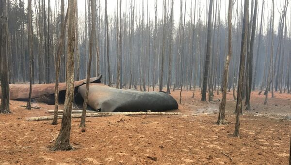 Последствия возгорания магистрального газопровода возле деревни Адино во Владимирской области. 24 октября 2018