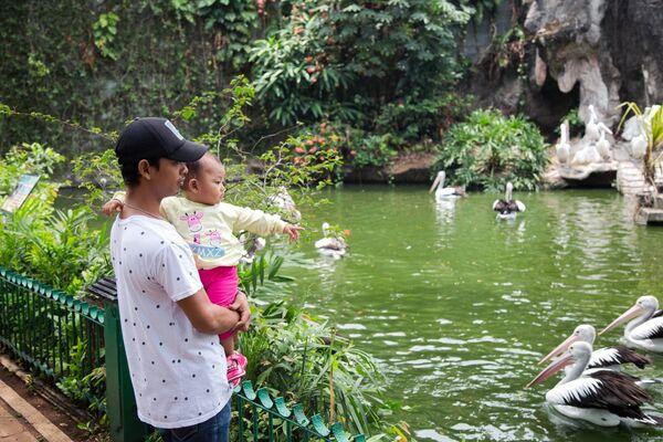 Посетители смотрят на пеликанов в зоопарке Рагунан в Джакарте