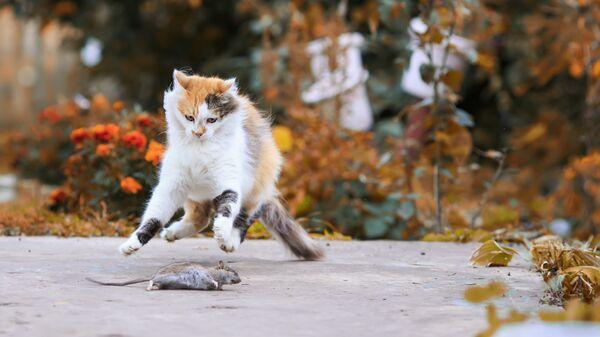 Кошка на охоте