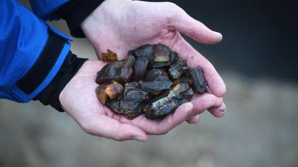 Янтарь, обнаруженный сотрудниками УБОП во время рейда по выявлению незаконной добычи янтаря в Калининградской области
