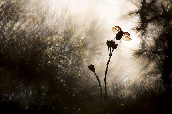 Работа победителя конкурса Nature Photographer of The Year 2018. Bastien Riu