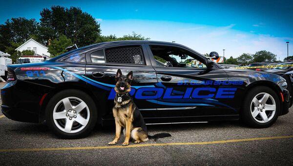Пес по кличке Топор, служивший в полиции города  Сент-Клер-Шорс, Мичиган, США