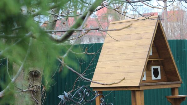 Первый трехкомнатный домик для уличных котов установили в курортном городе Зеленоградске на берегу Балтийского моря в Калининградской области