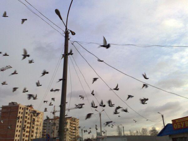 Птицы в городе