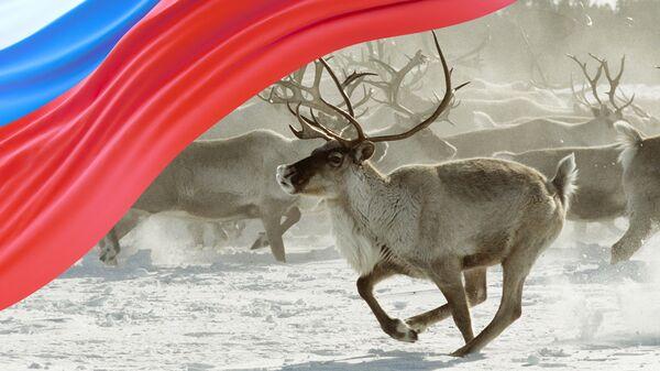 Иллюстрация - Ямало-Ненецкий автономный округ