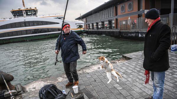 Рыбак с кошкой на реке Босфор в Стамбуле
