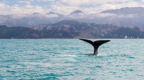У берегов Новой Зеландии