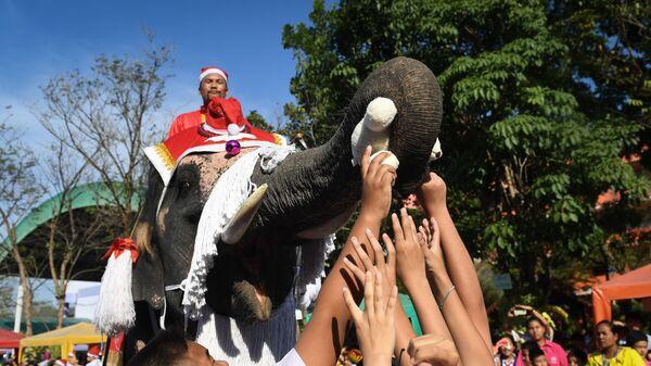 Слон в костюме Санта Клауса на праздновании Рождества в Аюттхае, Таиланд