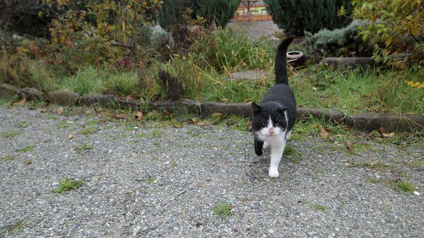Боевой кот Центра позитивной энергии